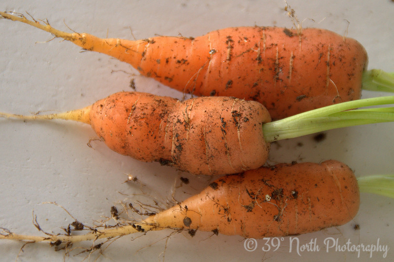 Homegrown Carrots by Laurie H.